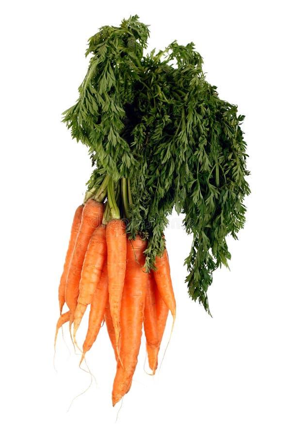 organicznie wiązek marchewki zdjęcia stock