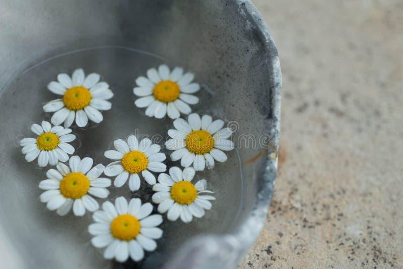 Organicznie ?ywio?owi Wellness kwiaty obrazy stock
