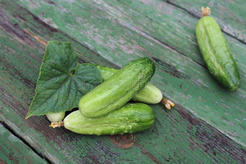 Organicznie zieleni ogórki na tle deski zdjęcia stock