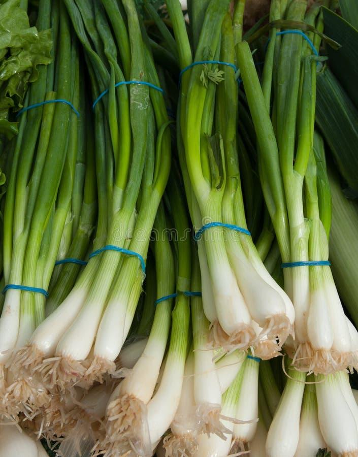 organicznie zielone cebule obrazy stock
