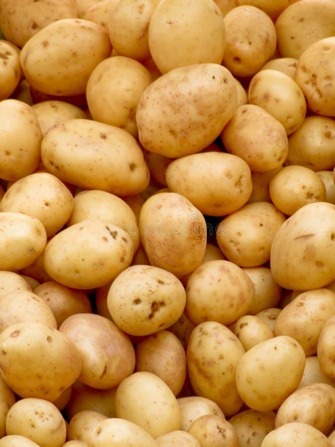 organicznych ziemniaków obraz royalty free