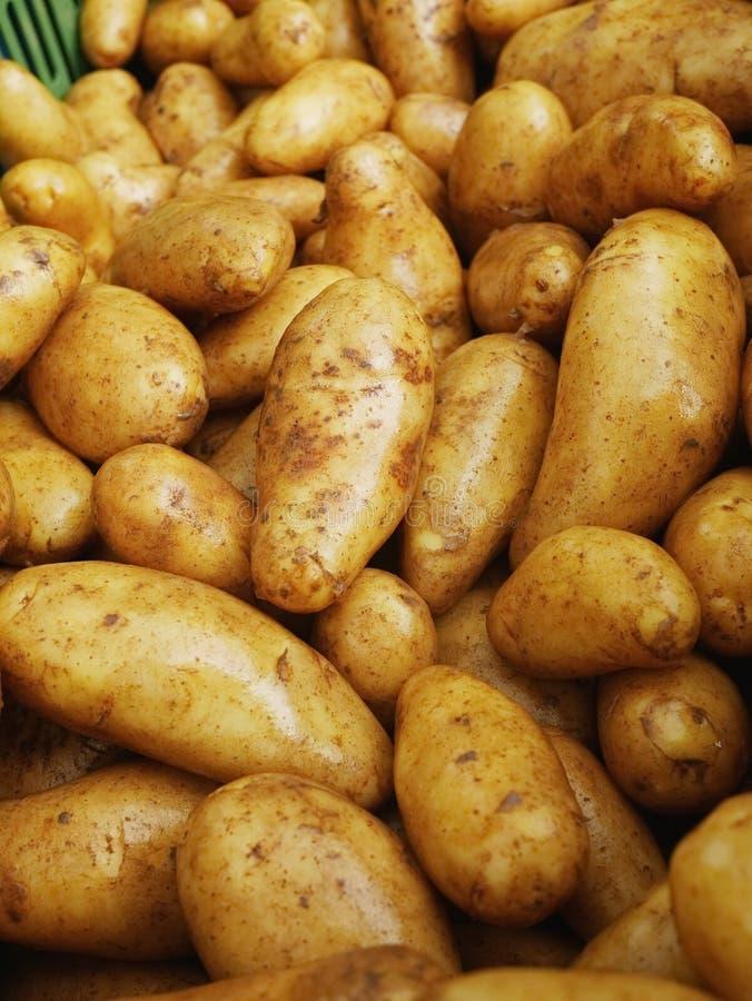 organicznych ziemniaków fotografia royalty free