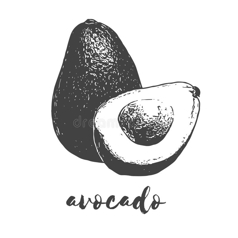 Organisch avocadofruit vector illustratie