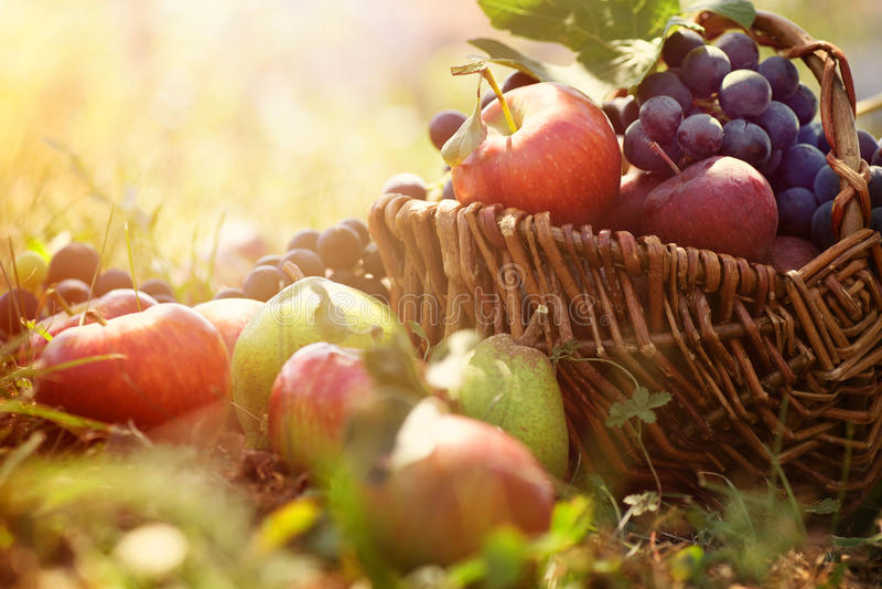 Organisch fruit in de zomergras stock foto