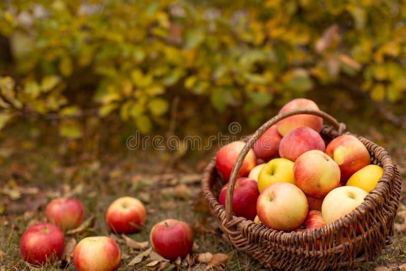 Organisch fruit in tuin royalty-vrije stock foto