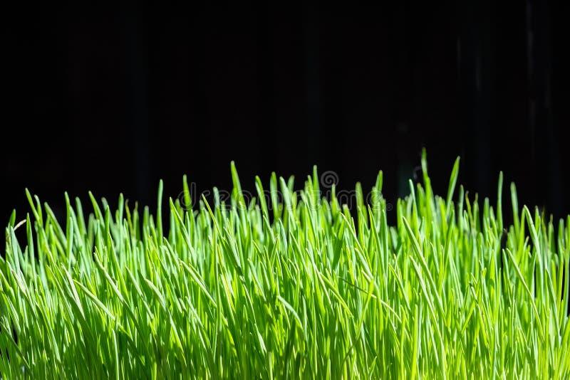 Organisch gras stock foto's