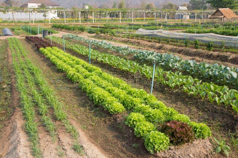 Organisch groentenlandbouwbedrijf stock foto