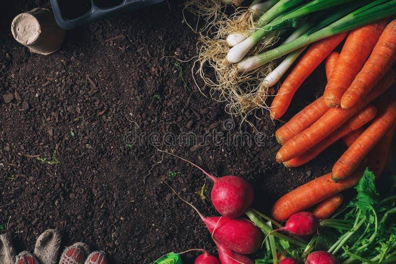 Organisch inlands opbrengst en het tuinieren materiaal met exemplaarruimte stock foto's
