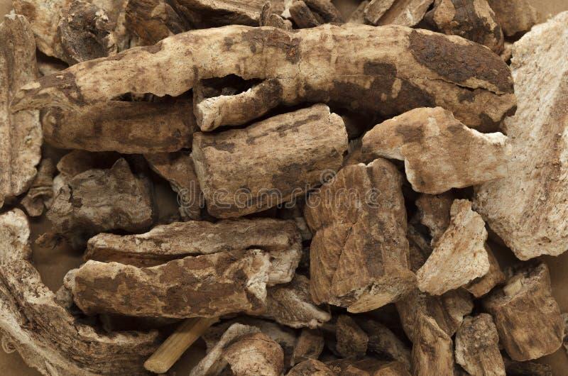 Organisch trocknen Sie Barken des Inders Jalap (Operculina-turpethum) stockfotografie