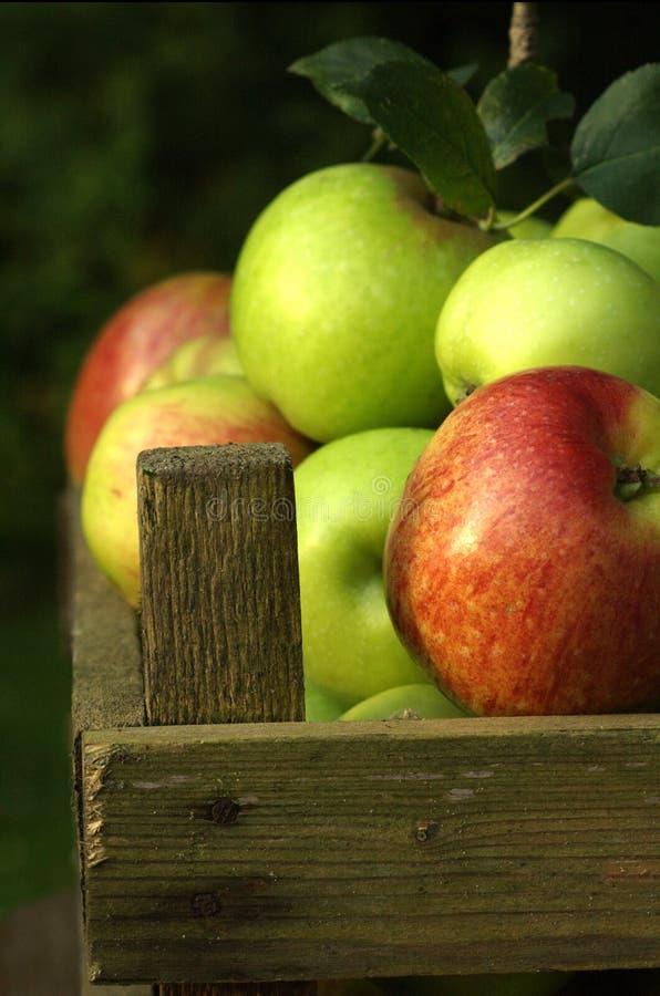 Organische appelen, voedsel. royalty-vrije stock afbeeldingen
