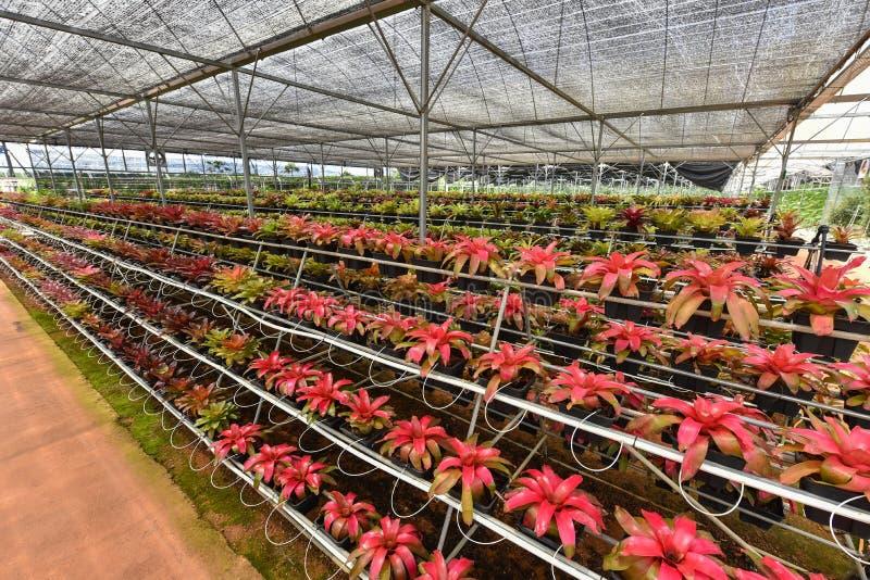 Organische Blume, die Garten bewirtschaftet stockfotografie
