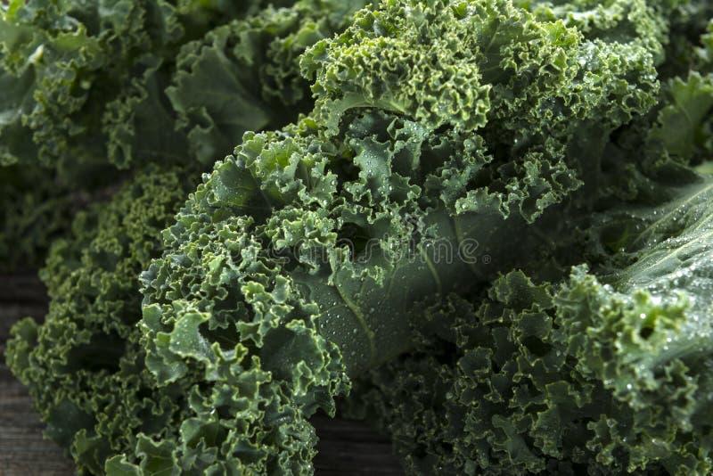 Organische Boerenkool stock afbeelding