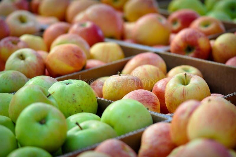 Organische frische und reife Äpfel in einem Kasten stockfotos