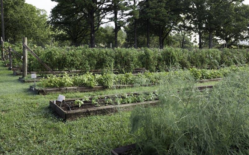Organische Gartenarbeit in Ozark Mountains stockbilder