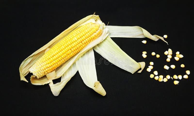 Organische gele suikermaïs royalty-vrije stock afbeelding