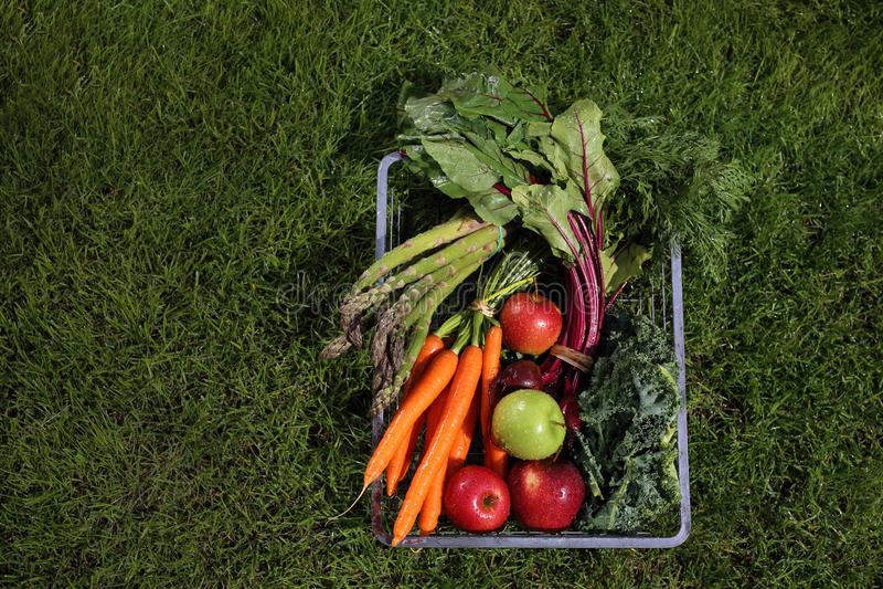 Organische gezonde groenten van uw eigen moestuin royalty-vrije stock afbeelding