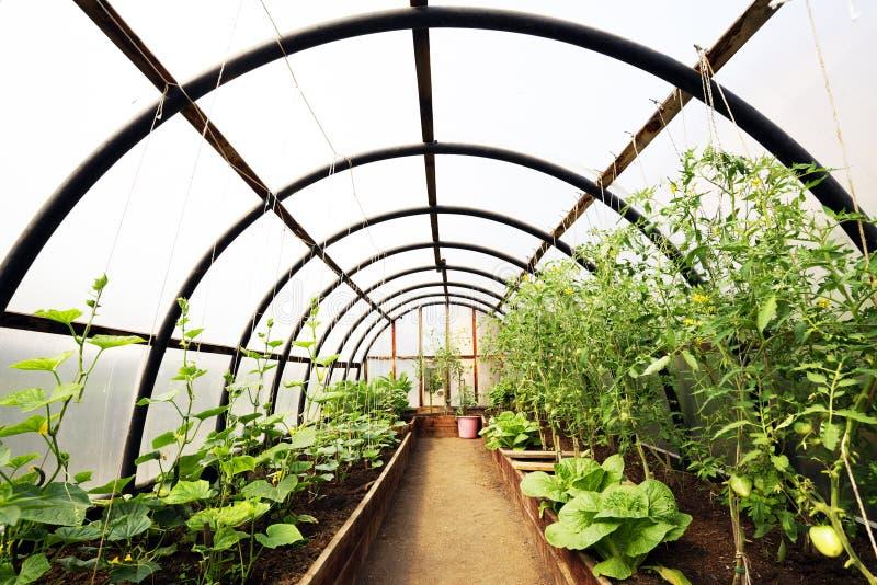 Organische groenten in serrebinnenland royalty-vrije stock afbeeldingen