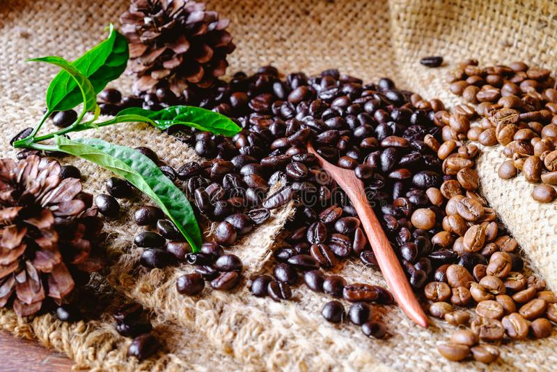 Organische Kaffeebohnen stockfotografie