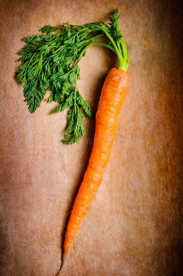 Organische Karotte lizenzfreie stockbilder