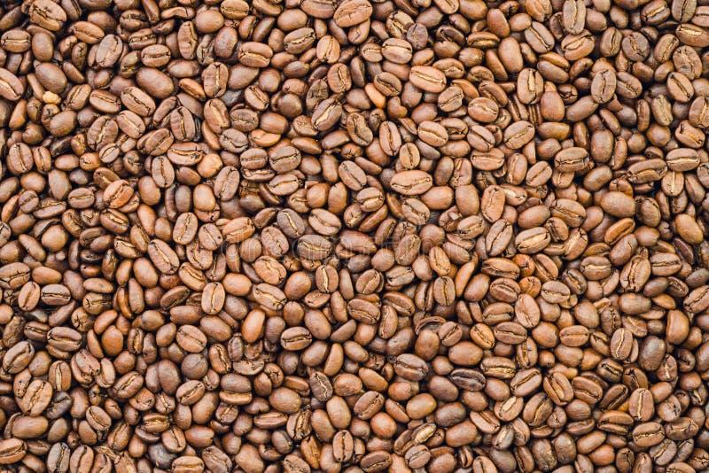 Organische koffiebonen - stock foto's