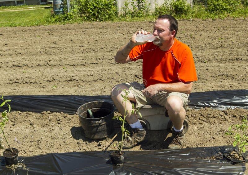 Organische Landbouwer Taking een Wateronderbreking stock afbeelding