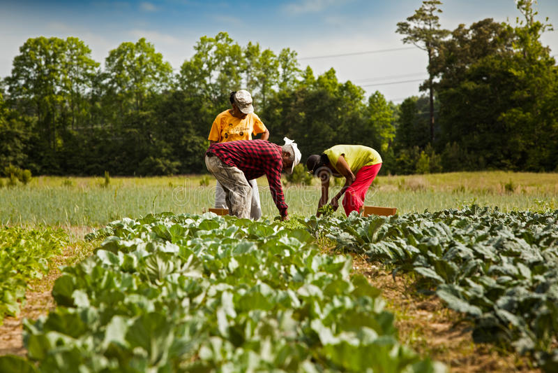 Organische landbouwers royalty-vrije stock afbeeldingen