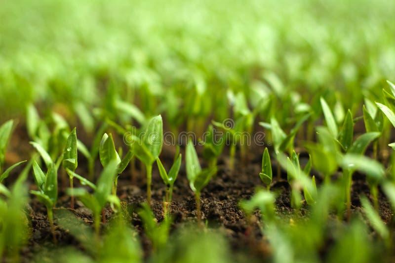 Organische Landwirtschaft stockfotos