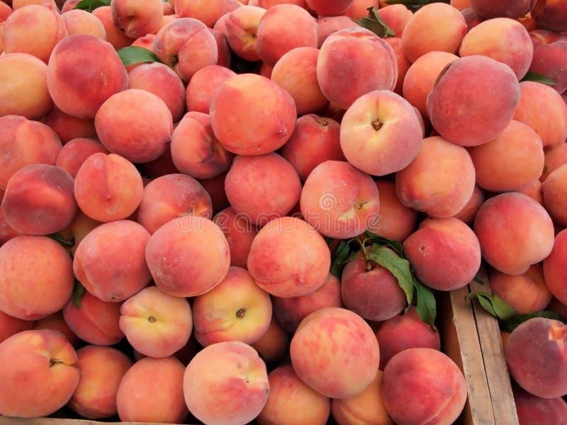 Organische Pfirsiche stockbild