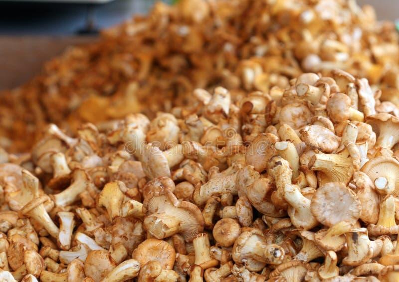 Organische Pilze Browns am Landwirt-Markt lizenzfreie stockfotografie