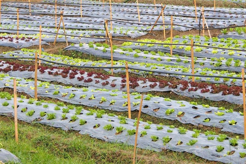 Organische plantaardige percelen royalty-vrije stock afbeelding