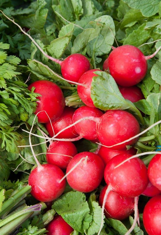 Organische Rode Radijzen stock afbeeldingen