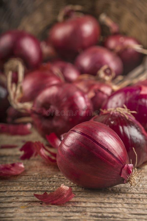 Organische rode ui stock afbeelding