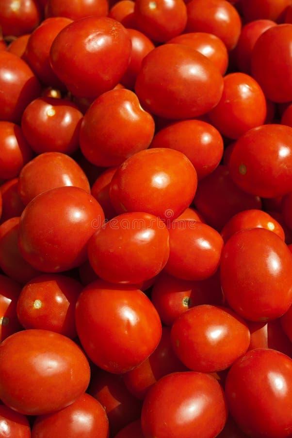 Organische Rom-Tomaten stockbild