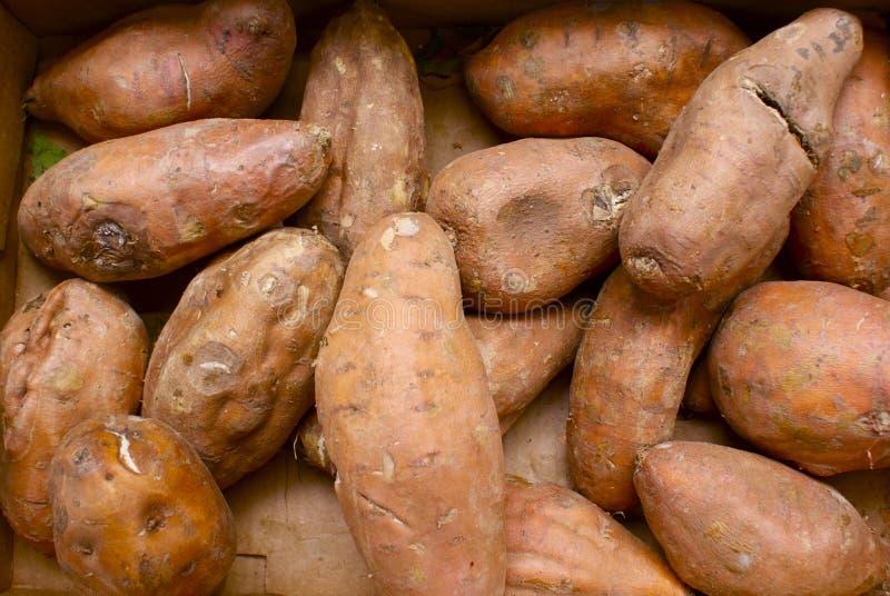 Organische süße Kartoffeln lizenzfreie stockbilder