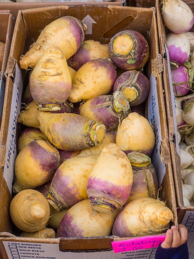 Organische schwedische Rübe stockfotos