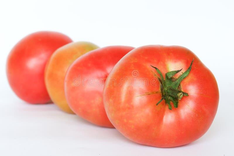 Organische Tomaten - getrennt lizenzfreies stockfoto