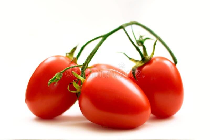 Organische Tomaten von Mexiko lizenzfreie stockbilder