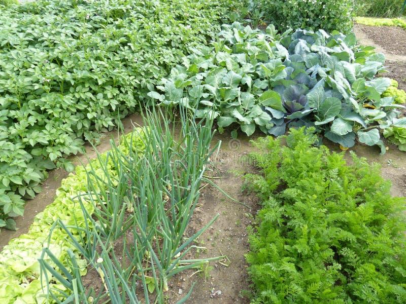 Organische tuin stock fotografie