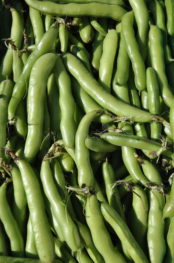 Organische Tuinbonen stock fotografie