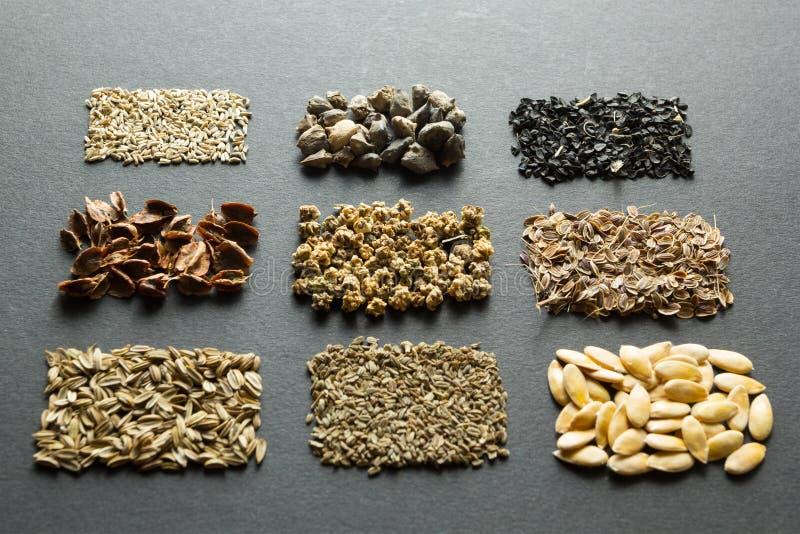 Organische zaden: dille en meloen met wortelen en venkel met rabarber en sla, bieten, spinazie en uien op een zwarte achtergrond royalty-vrije stock afbeeldingen