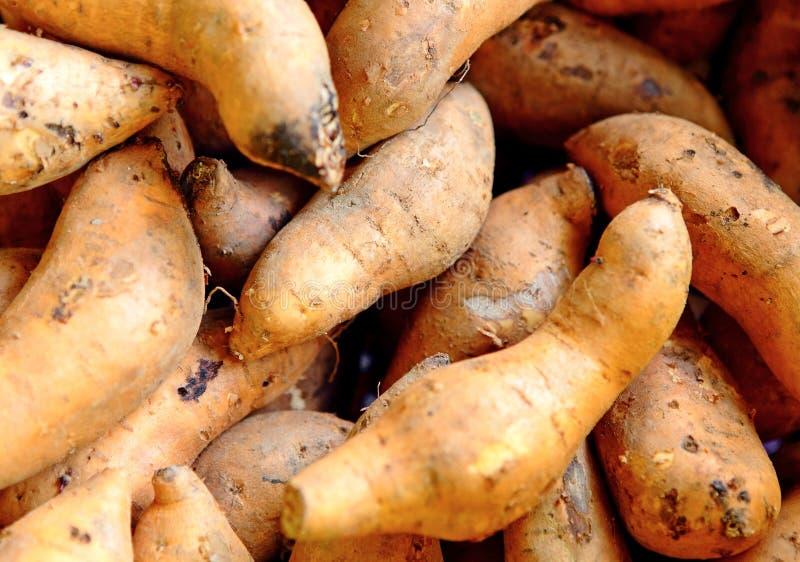 Organische zoete potatoe stock afbeelding