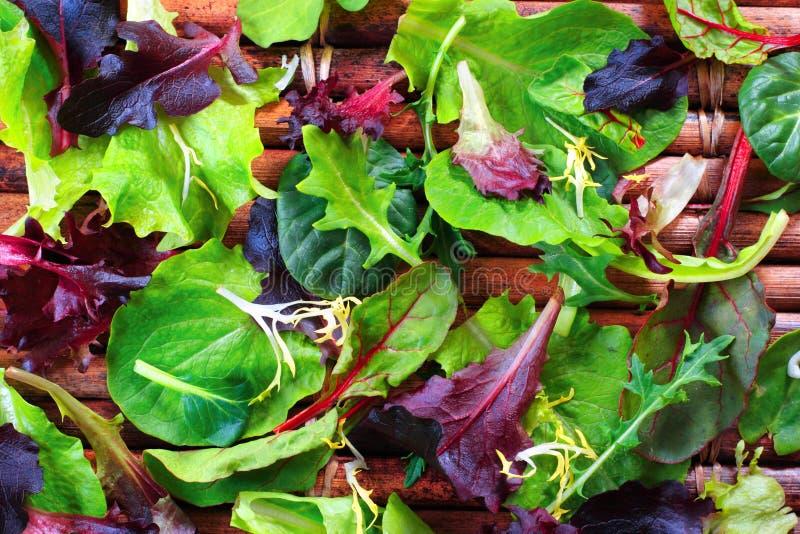 Organischer Frühlings-Mischungs-Kopfsalat stockfotografie