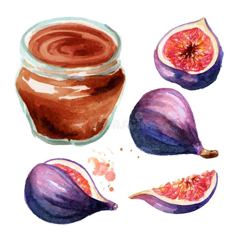 Organischer Fruchtmarmeladensatz Glasgefäß Feigenmarmelade und frische Frucht lokalisiert auf weißem Hintergrund Aquarellhand gez stockfotografie