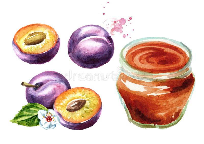 Organischer Fruchtmarmeladensatz Glasgefäß Pflaumenmarmelade und frische Früchte lokalisiert auf weißem Hintergrund Aquarellhand  stock abbildung