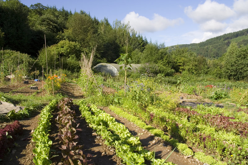 Organischer Garten 1 stockfotos