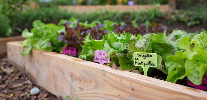 Organischer Gemüsegarten stockfoto