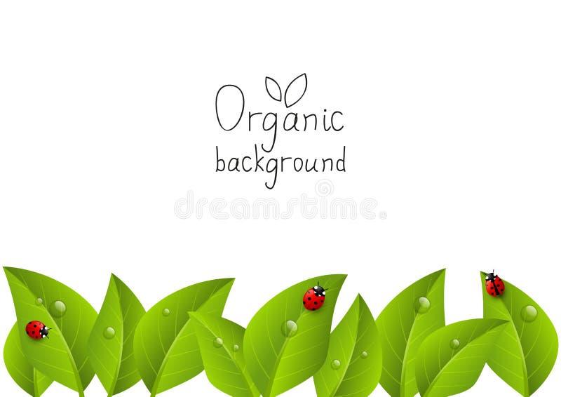 Organischer Hintergrund stock abbildung