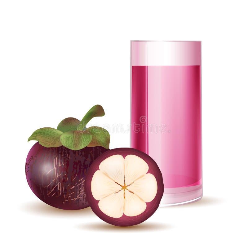 Organischer Mangostanfrucht-Tee vektor abbildung