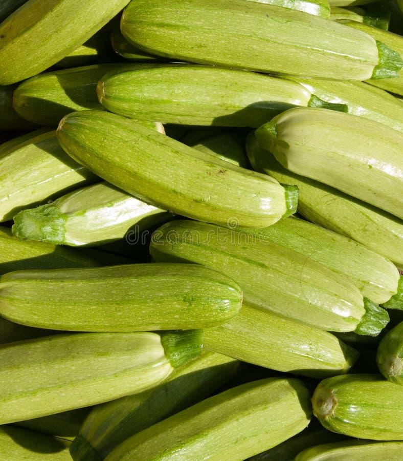 Organischer Zucchini-Kürbis lizenzfreie stockfotos