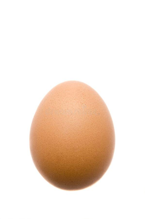 Organisches Ei lizenzfreies stockfoto